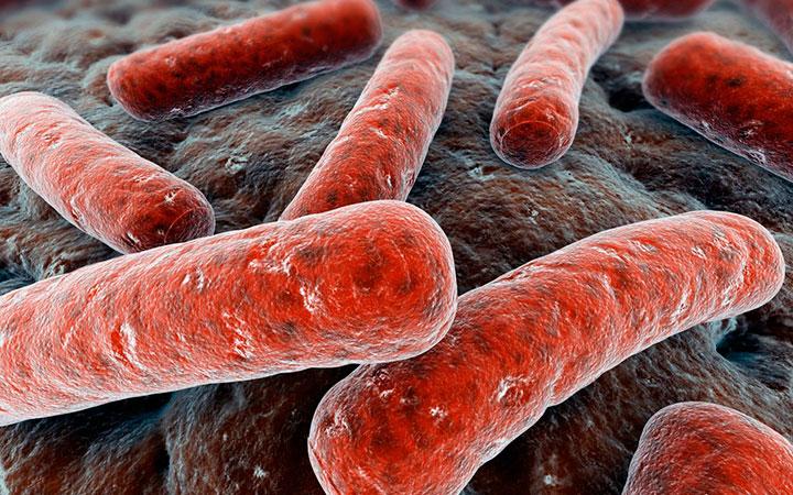 Бактерии гарднереллы у мужчин