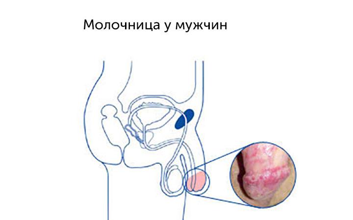 vlagalishe-penis-kak-ya-poyavilsya