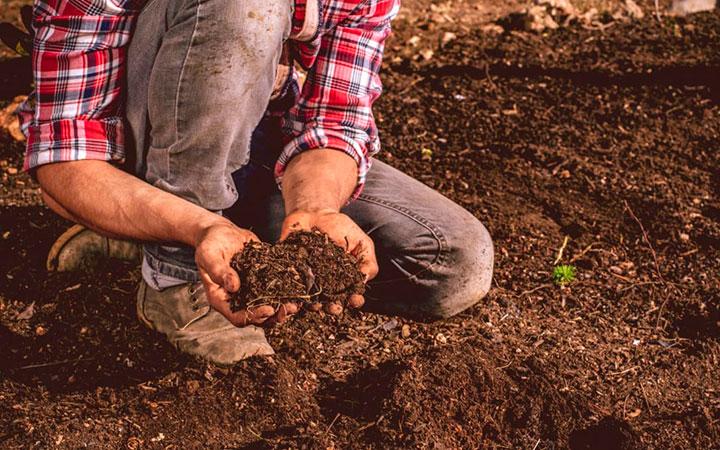 Инфицироваться паразитами можно через почву